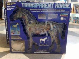 Transparent Horse